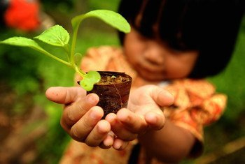 A young girl at a plant nursery in Indonesia.