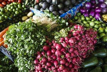 أفاد تقرير أممي جديد بأن نحو 14% من الأغذية في العالم تفقد في مرحلة ما بعد الحصاد وقبل الوصول إلى مستوى البيع بالتجزئة، بما في ذلك من خلال الأنشطة في المزرعة والتخزين والنقل.