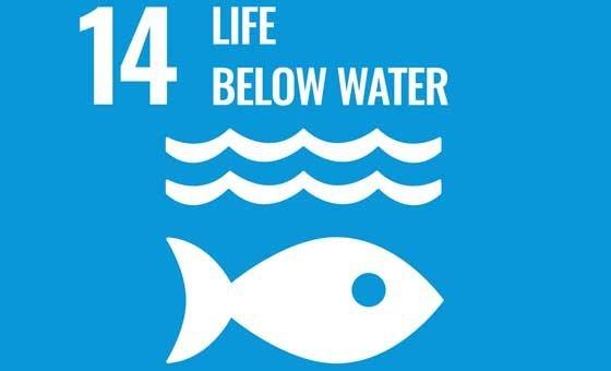 SDG Goal 14: Life Below Water.