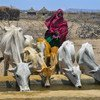 Ethiopia experienced a severe food crisis in 2019, with hunger and malnutrition rates soaring to alarming levels.