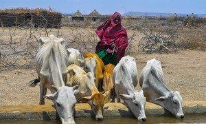 В 2019 году Эфиопия пережила продовольственный кризис.