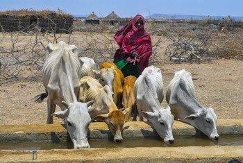 Etiopía experimentó una grave crisis alimentaria en 2019, con unas tasas de hambre y malnutrición que se dispararon hasta niveles alarmantes.