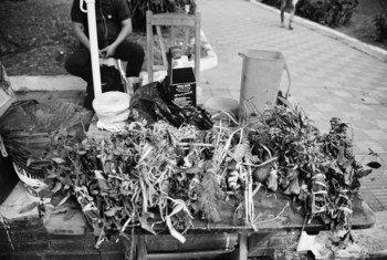 Puesto de venta de yuyos en el centro de Asunción, Paraguay.