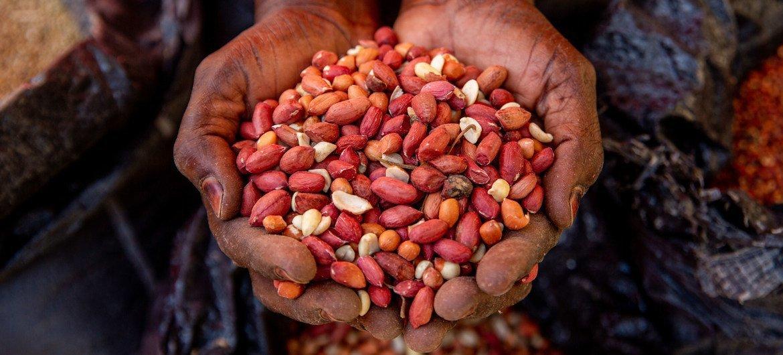 Los campesinos del noreste de Nigeria no han podido sembrar sus alimentos debido a la inseguridad.