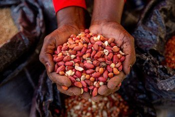 Farmers in northeastern Nigeria have been unable to cultivate their crops because of insecurity.