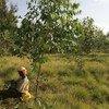 Leonidas Nzigiyimpa a été le premier Burundais dans l'histoire de son pays à impliquer les populations autochtones dans la gestion durable des forêts.