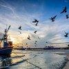 तटीय और समुद्री पारिस्थितिकी तंत्र, एक अरब से अधिक लोगों के लिये भोजन व आजीविका का स्रोत हैं.