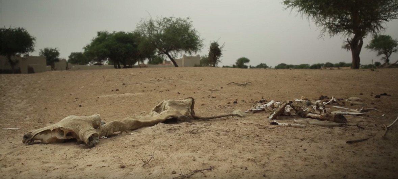 Chad sufre por la degradación medioambiental y la rápida desertificación. Sus habitantes están entre los más afectados por los impactos del cambio climático.