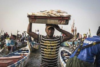 O atum gera recursos que sustentam a segurança alimentar e nutricional