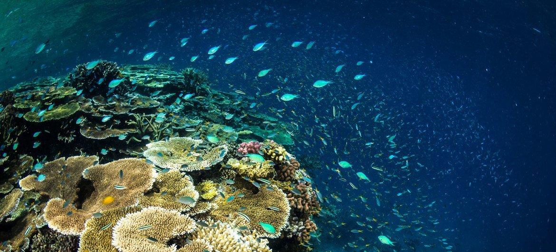 澳大利亚大堡礁珊瑚。