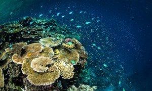 По данным ООН, около 50 процентов коралловых рифов пострадали в результате деятельности человека.