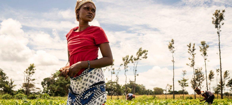 一名妇女在肯尼亚一家合作农场劳作。