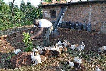 Andrew Kahwa, ambaye pia ni mtangazaji wa redio, akiwalisha baadhi ya sungura wake, nyumbani kwake Hoima Uganda.