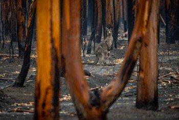 Los incendios forestales en Australia son un muestra más del avance del cambio climático.