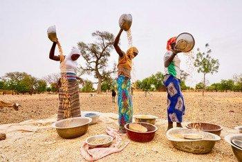 布基纳法索的妇女正在田间劳作。