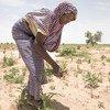 تواجه النيجر نقصا في الغذاء ومستويات دخل منخفضة.