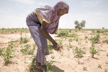 尼日尔面临粮食短缺和低收入水平。