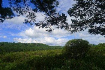 """河北省承德市坝上地区的塞罕坝林场。面对极其恶劣的自然环境和生活条件,几代务林人艰苦创业,建成了世界上面积最大的人工林。塞罕坝林场建设者荣获2017年联合国""""地球卫士奖""""。"""