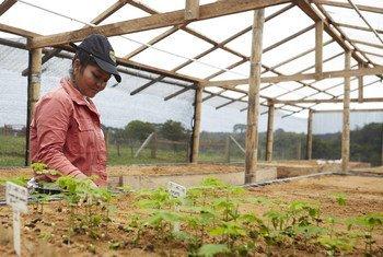 A través de la Asociación de Mujeres Trabajadoras por el Desarrollo del Yarí, en Caquetá, Colombia, Raquel Espinoza  y sus compañeras restauran el bosque húmedo construyendo corredores ecológicos que interconectan la Amazonía