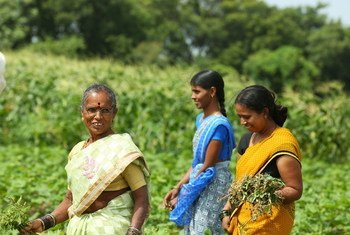 Women farmers in India have made the shift to organic farming.