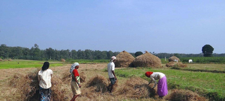 भारत में खेतों में काम करतीं कुछ महिला किसान.