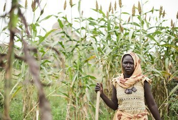 An over-reliance on traditional activities such as farming has left all but a handful of least developed countries (LDCs) extremely vulnerable to the economic shock caused by COVID-19. Pictured here, a family farmer in Chad. (file photo)