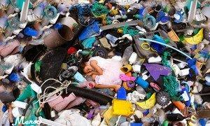 La basura plástica en las playas causa graves daños a los ecosistemas y representa un riesgo de supervivencia para las comunidades costeras.