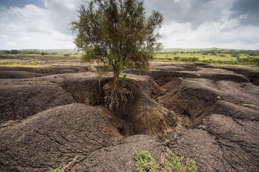 Le paysage massaï tanzanien a connu une augmentation spectaculaire de l'érosion des sols.