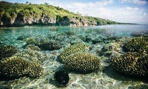 Beveridge Reef, un récif corallien situé dans les eaux de Niue dans l'océan Pacifique central.