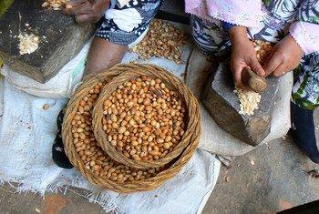 زيت الأركان معروف باستخداماته الغذائية والتجميلية.