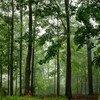 إحدى الغابات في ولاية نيويورك تشهد هدوءا بعد هطول الأمطار الغزيرة.