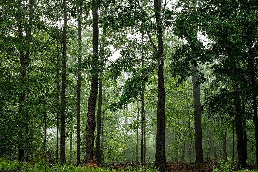 Le calme s'installe à la suite d'une tempête de pluie dans une forêt de l'État de New York.
