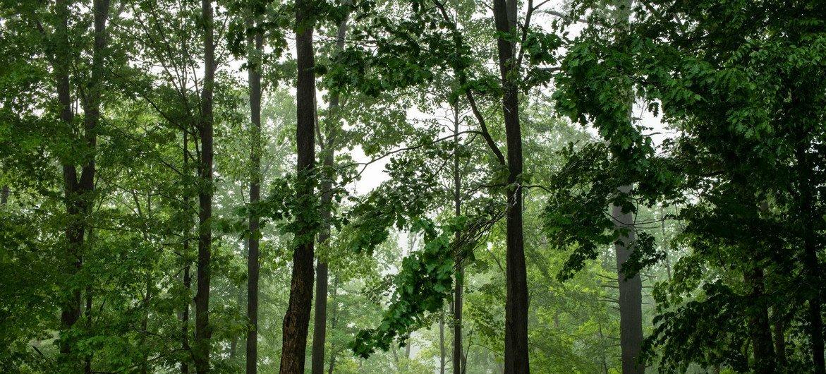 Restauração das florestas também evita crises de biodiversidade, geram empregos e melhoram as condições de subsistência das populações que vivem nela ou ao redor das matas