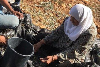 Жертвами насилия со стороны израильских поселенцев на Западном берегу чаще всего становятся сельские жители.
