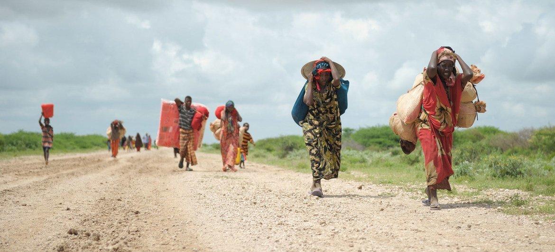 En Somalie quelque 2,6 millions de personnes pourraient être confrontées à une insécurité alimentaire grave en raison des faibles précipitations, des inondations et des criquets pèlerins.