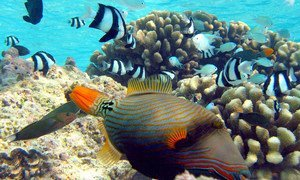 Various fish species browse over a shallow coral reef.
