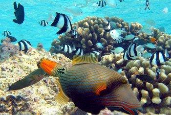 Des poissons au milieu de coraux.