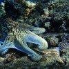 Un océan sain est crucial pour la survie de la planète.