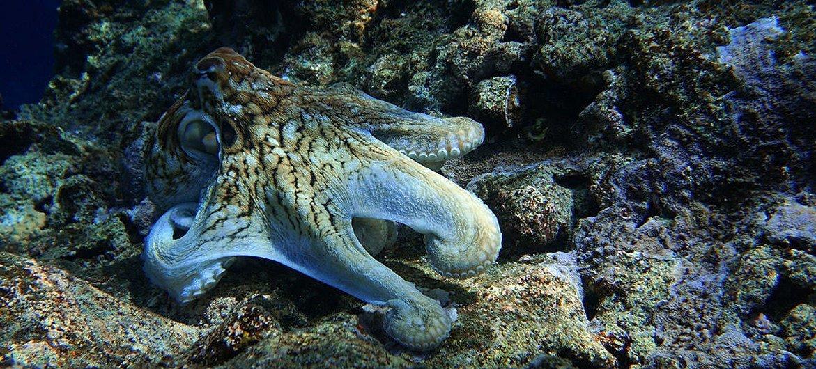 Un océano saludable es crucial para la supervivencia del planeta.
