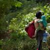 Многие мигранты пешком пересекают Дарьенский пробел - джунгли, разделяющие Колумбию и Панаму.