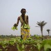 A farmer in the Democratic Republic of the Congo where 1 in 3 people suffer from acute hunger.