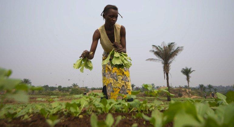 مزارعة في جمهورية الكونغو الديمقراطية حيث يعاني شخص واحد من بين كل ثلاثة من الجوع الحاد.