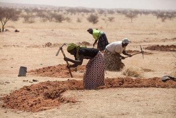 Des femmes au Niger préparent des champs pour la saison des pluies dans le cadre d'une initiative pour lutter contre la désertification.