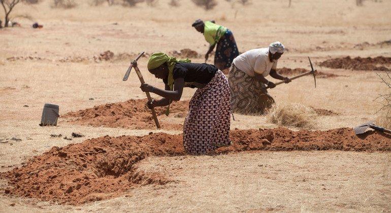 Women in Niger prepare fields for the rainy season as part of an anti-desertification initiative.