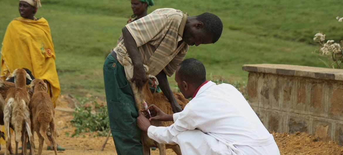 New UN report outlines ways to curb growing spread of animal-to-human diseases | 1