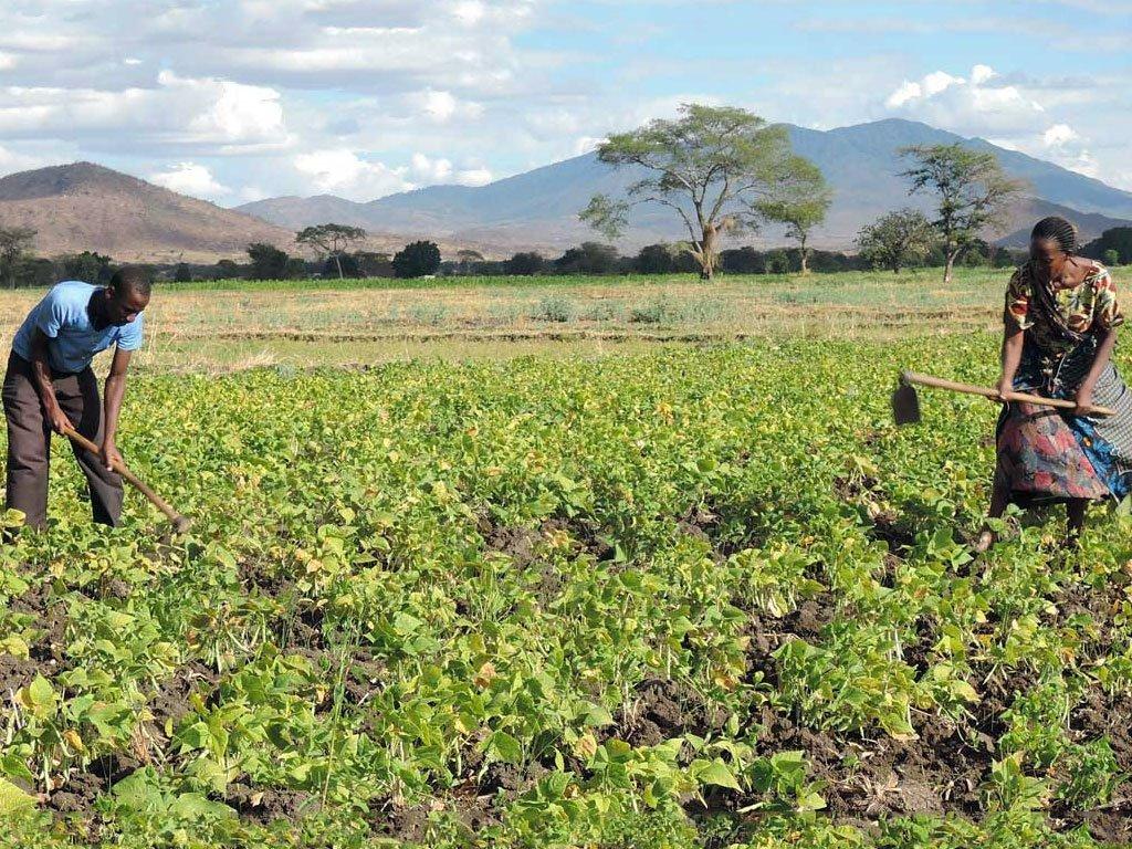 Los campesinos en Tanzania reciben ayuda para aumentar su seguridad alimentaria durante la pandemia de COVID-19