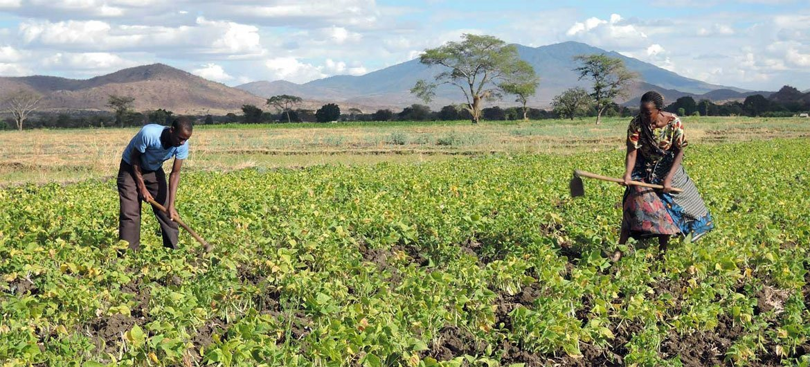 Small-scale farmers successful  Tanzania are receiving enactment    to amended   nutrient  information    successful  the look   of the COVID-19 pandemic.