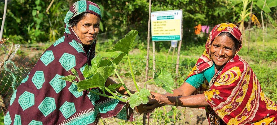 Mulheres em Bangladesh participam da agricultura resiliente ao clima.