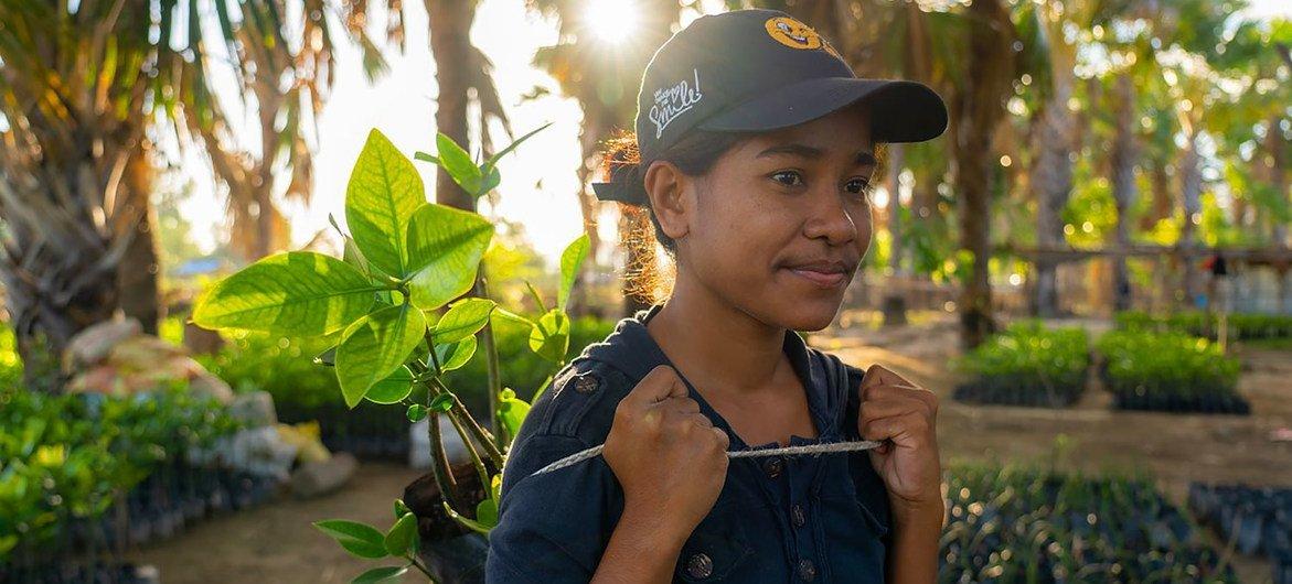 Comunidades no Timor-Leste estão ajudando a recuperar os manguezais.