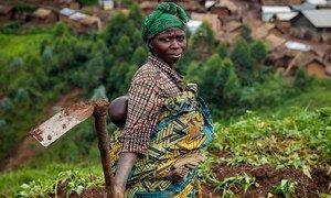 刚果民主共和国的境内流离失所者常常无法获得谋生所需的耕地。